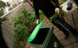 Landing image bins and environment green waste collection.jpg