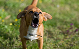 Landing-image-community-and-care-barking dogs and noisy animals.jpg