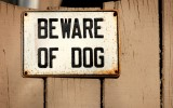 Landing image community and care dangerous dogs.jpg