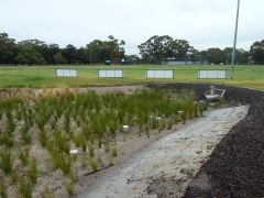 Photo of reed bed at sewell reserve stormwater harvesting project
