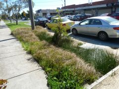 Photo of major road raingarden showing vegetation and cars