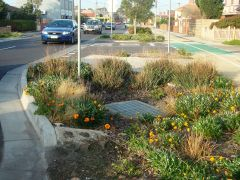 Photo of vegetation and drain of raingarden at O\'Hea street