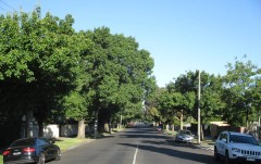Street trees provide a wide range of essential ecosystem services